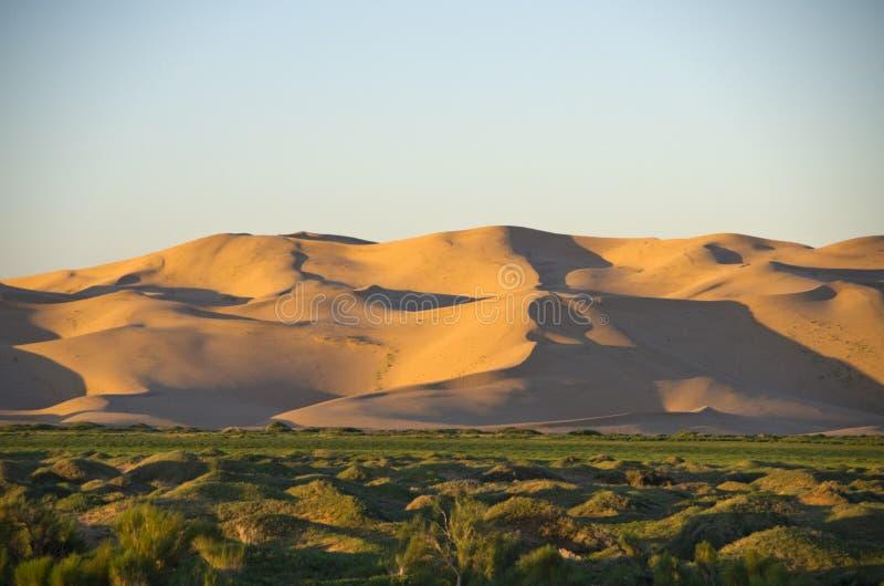 虾虎鱼沙漠,蒙古 库存图片