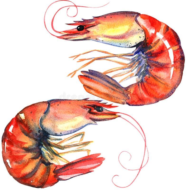 虾 大虾 海鲜 在白色的水彩例证 库存例证