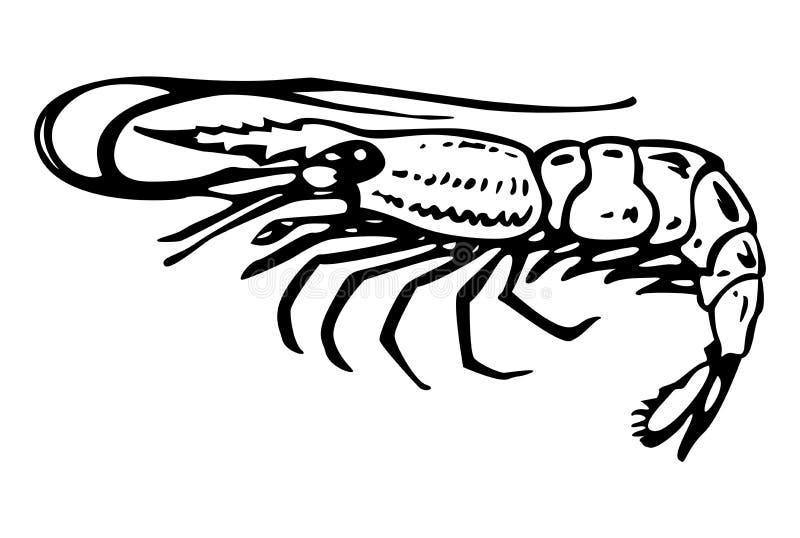 虾 向量例证