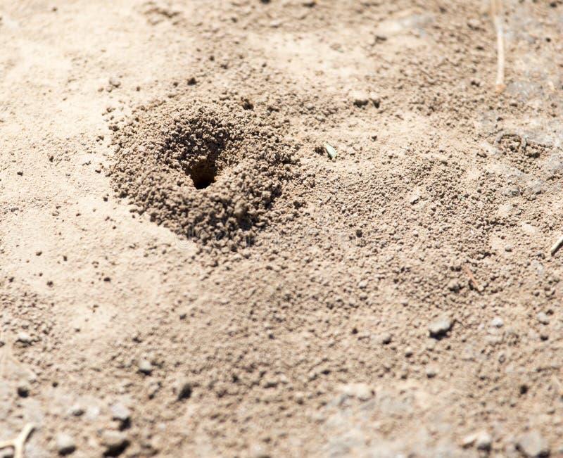 蚁丘的特写镜头图象在土壤的 免版税库存图片