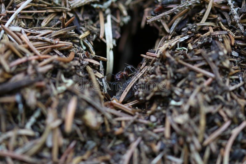 蚂蚁出去了房子 免版税库存照片