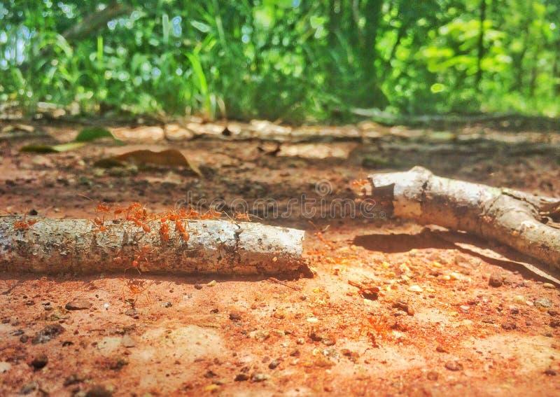 蚂蚁团结在森林里 免版税库存图片