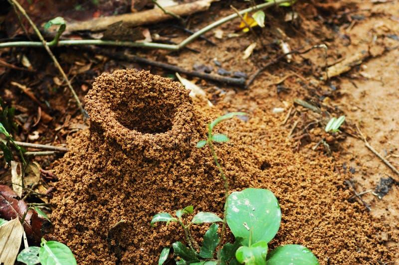 蚂蚁大小山密林 库存照片