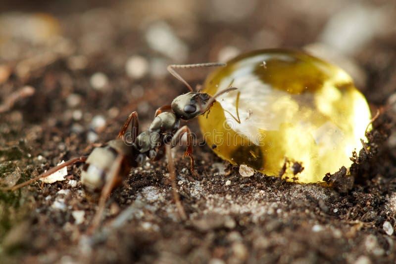 蚂蚁宏指令 免版税图库摄影