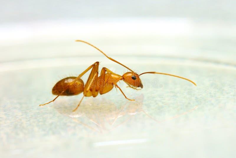 蚂蚁宏指令 免版税库存图片