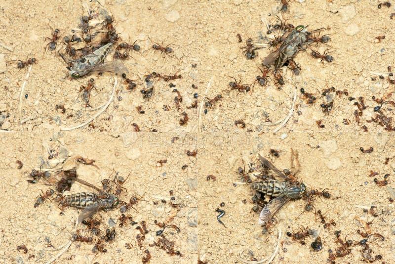 蚂蚁寻找 免版税库存照片