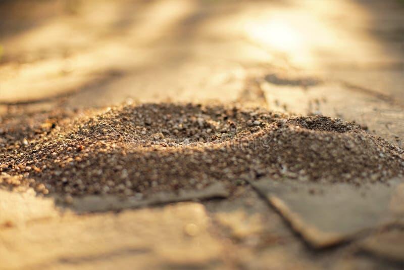 蚂蚁小巢在狂放的瓦片石地板的在晴朗的庭院里 免版税库存图片