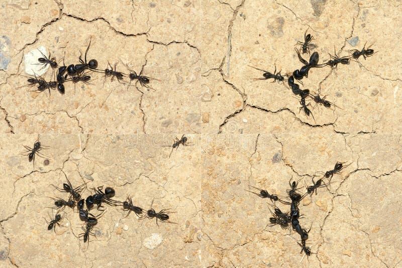蚂蚁战争 免版税库存图片
