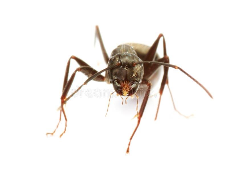 蚂蚁接近  免版税库存图片