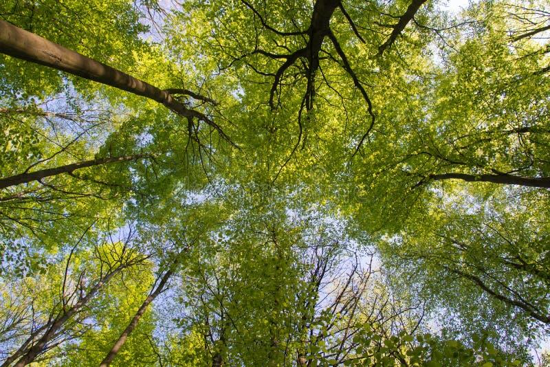 蚂蚁景色在树查寻在森林里 图库摄影