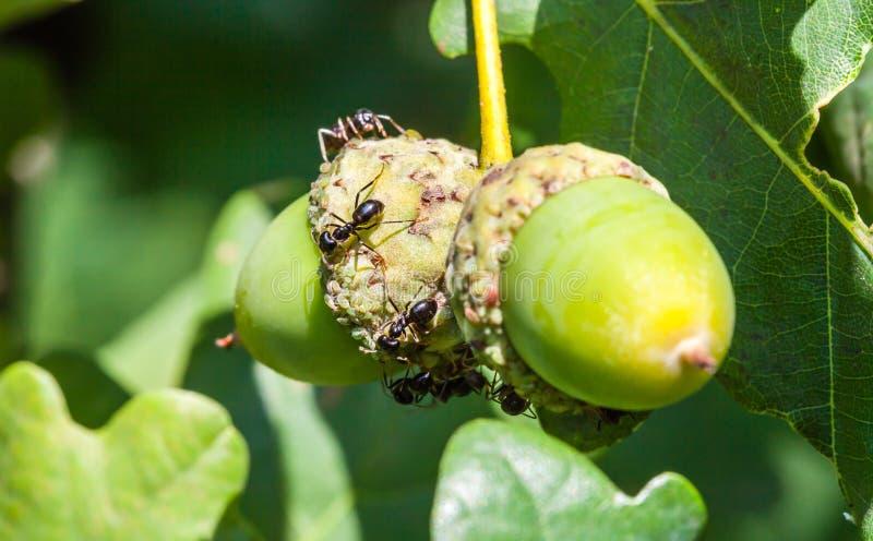 蚂蚁步行 免版税库存照片