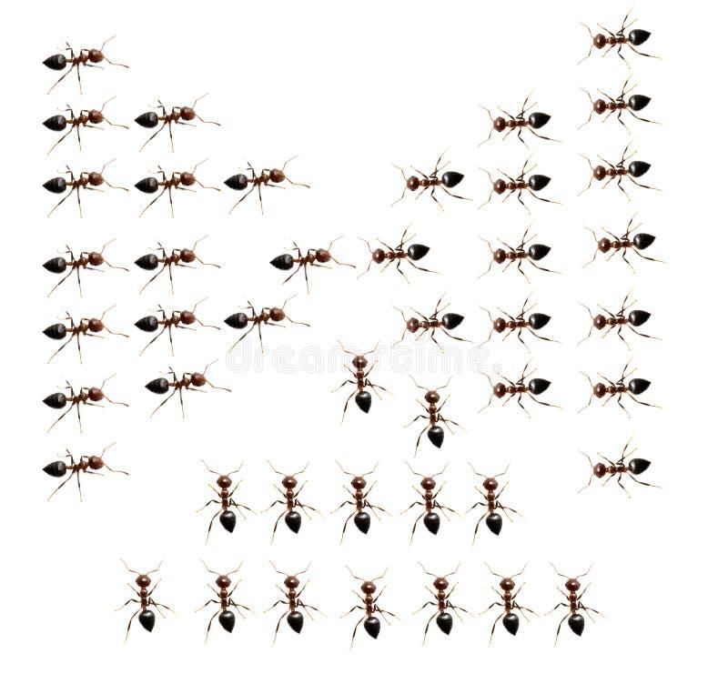 蚂蚁的军事独立小分队在白色背景的 图库摄影