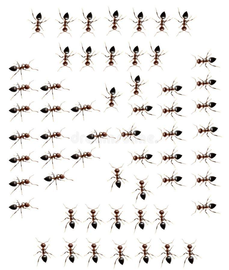 蚂蚁的军事独立小分队在白色背景的 免版税图库摄影