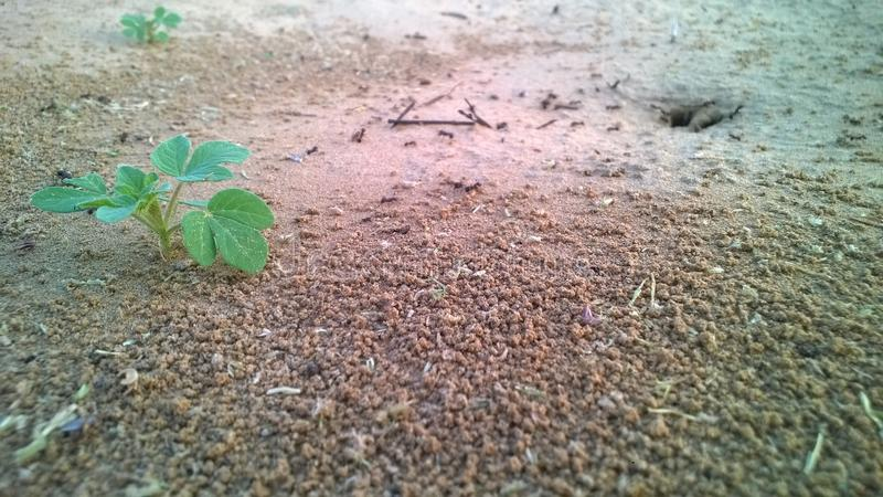 蚂蚁的家 免版税库存图片