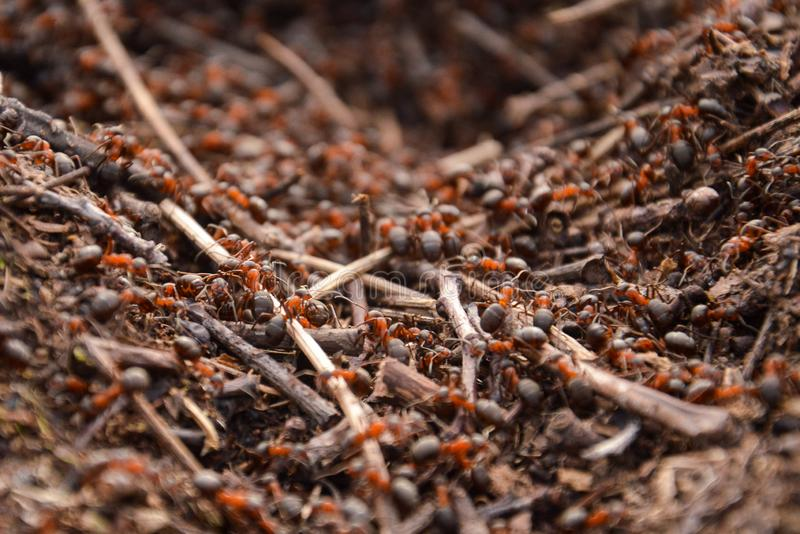 蚂蚁苦干者在工作 免版税图库摄影