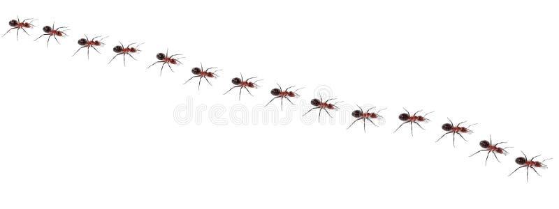 蚂蚁走 库存例证