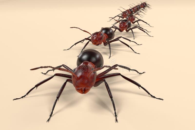 蚂蚁走 皇族释放例证