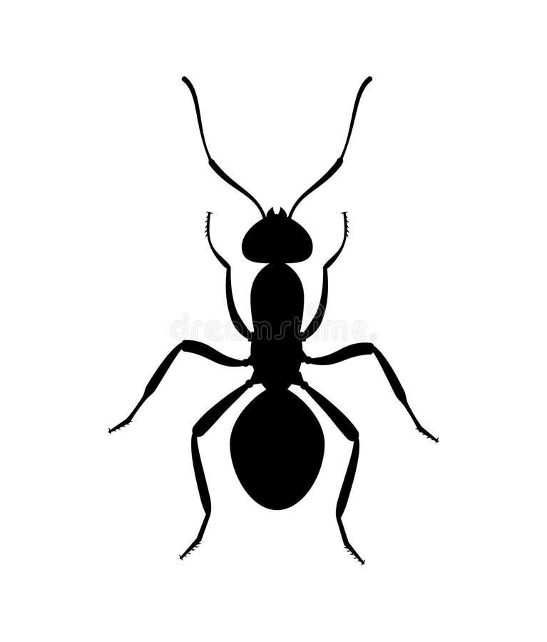 蚂蚁黑色剪影顶视图 象或昆虫标志 皇族释放例证
