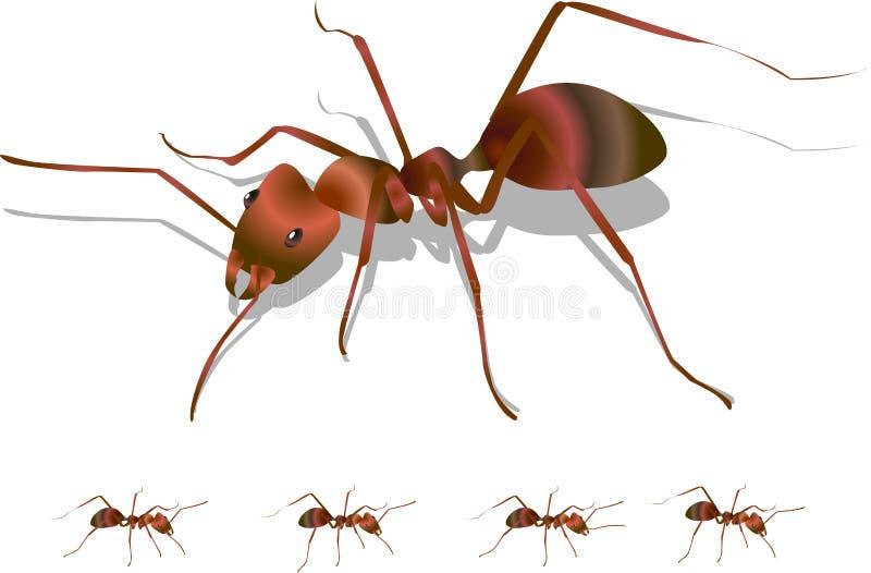蚂蚁 库存例证