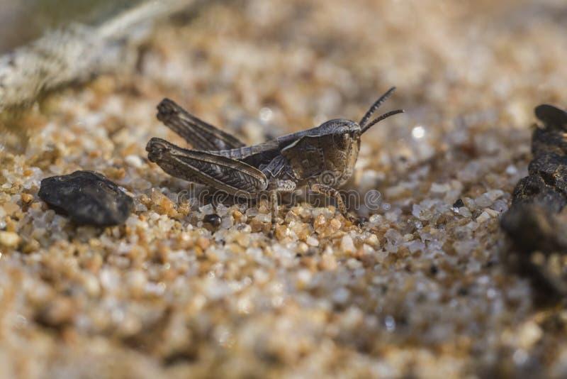 蚂蚱一点 库存照片