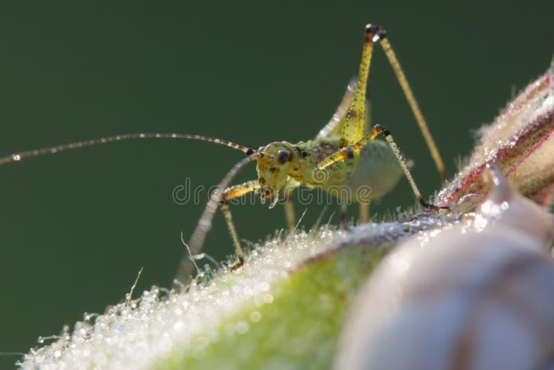 蚂蚱蜗牛 免版税图库摄影