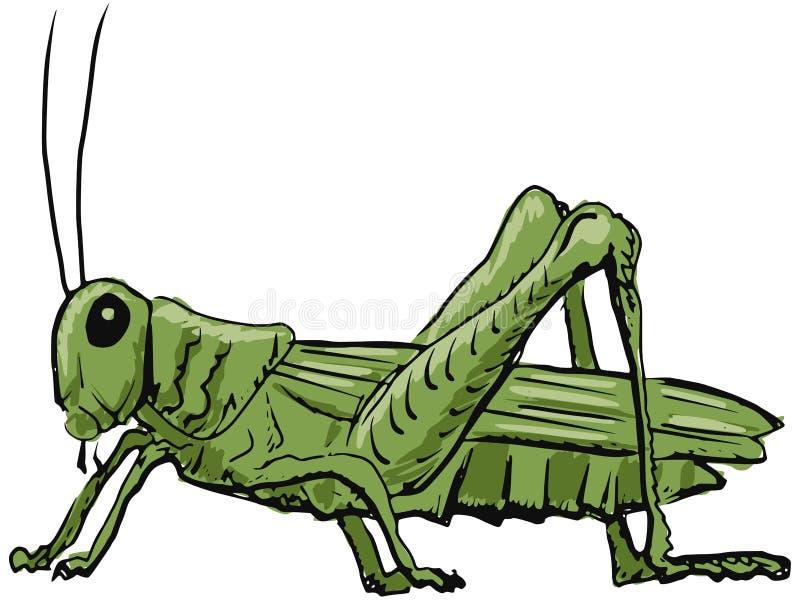 蚂蚱 向量例证
