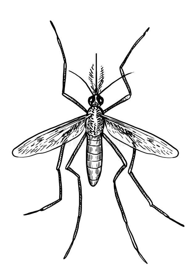 蚊子例证,图画,板刻,墨水,线艺术,传染媒介 向量例证
