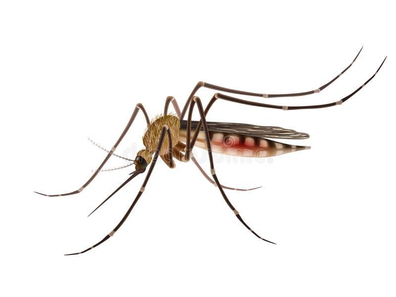 蚊子现实例证 皇族释放例证