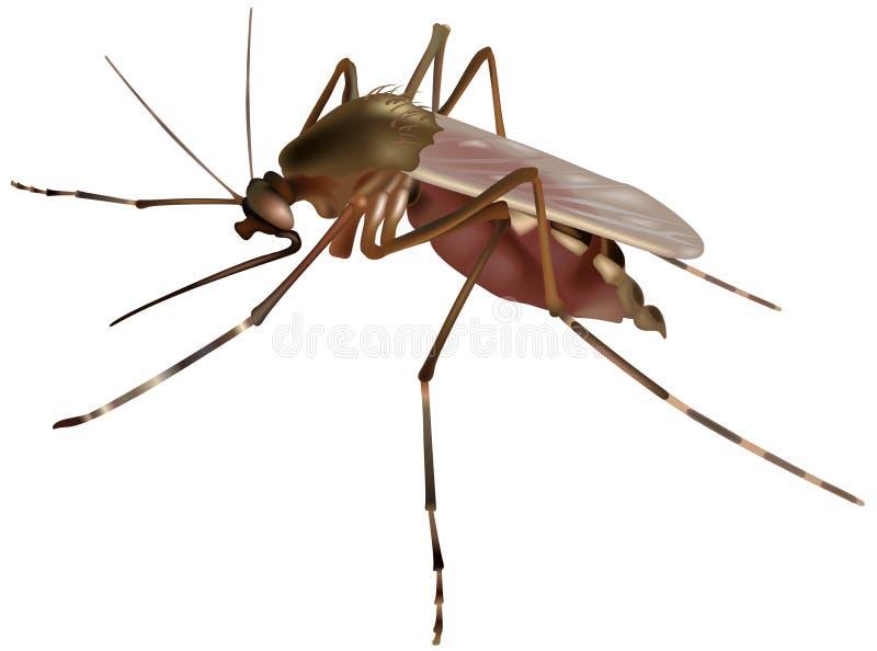 蚊子 皇族释放例证