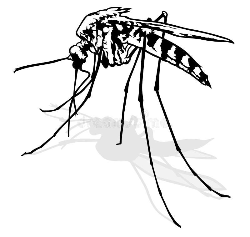 蚊子 库存例证