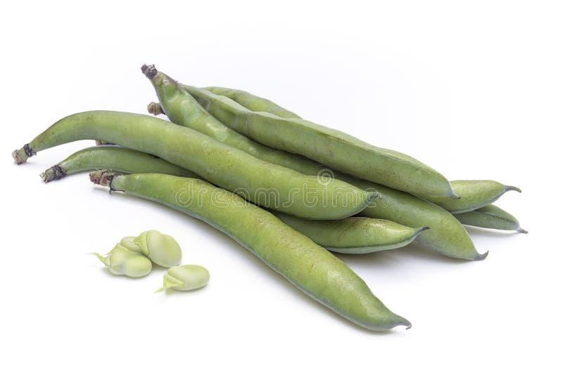 蚕豆野豌豆氟乙酰溴苯胺var 荚和种子的少校 免版税图库摄影
