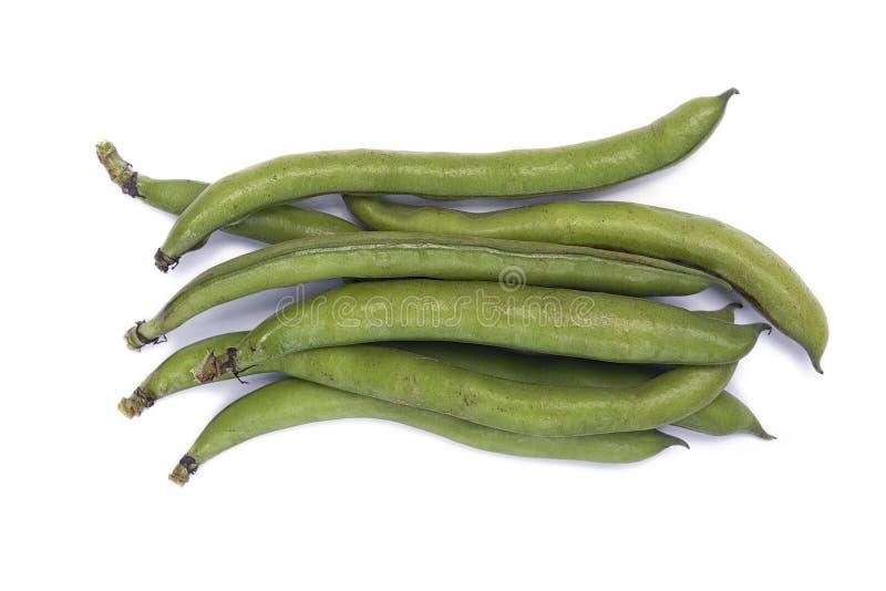 蚕豆野豌豆氟乙酰溴苯胺var 荚的少校 免版税库存图片