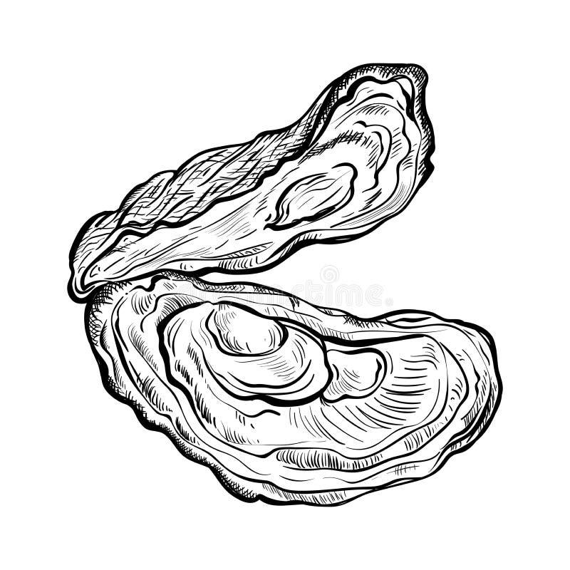 蚝壳 被刻记的样式 背景查出的白色 向量例证