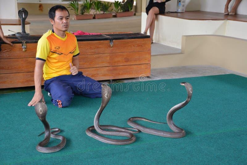 蛇与眼镜蛇的执行者戏剧展示在一个展示期间在动物园里 免版税库存照片