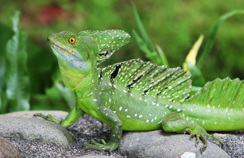 蛇怪绿宝石 图库摄影