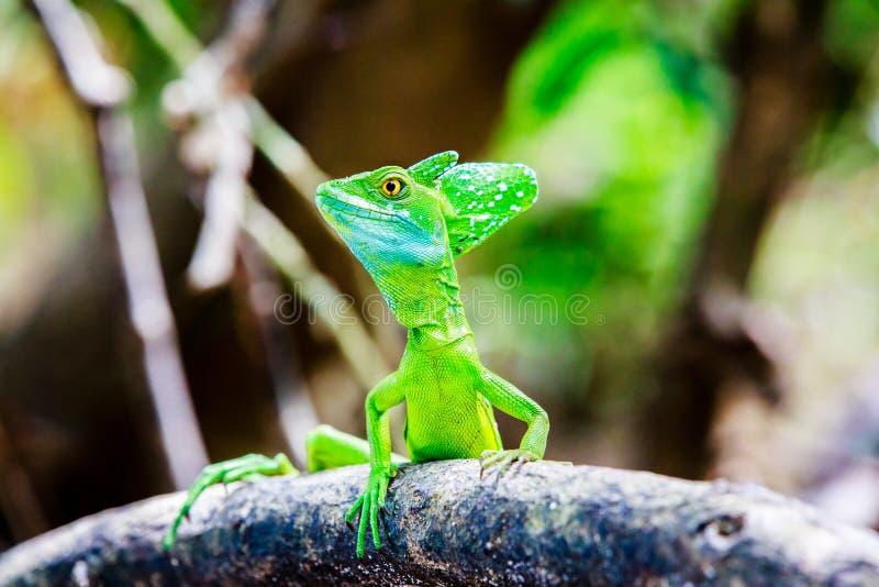 蛇怪绿蜥蜴 库存图片