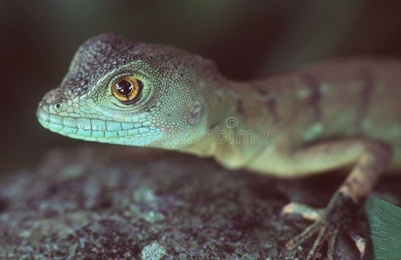 蛇怪 库存照片