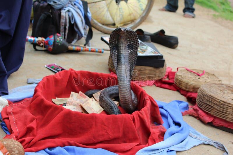 蛇把戏 免版税图库摄影