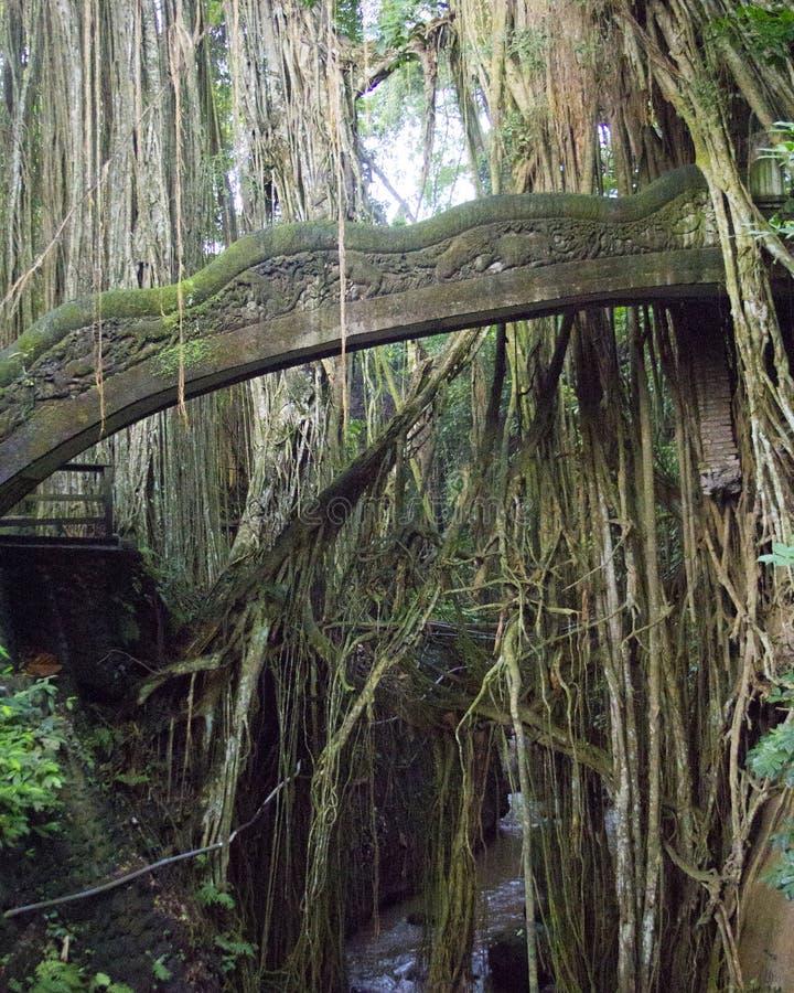蛇桥梁在神圣的猴子森林里在巴厘岛印度尼西亚 免版税图库摄影