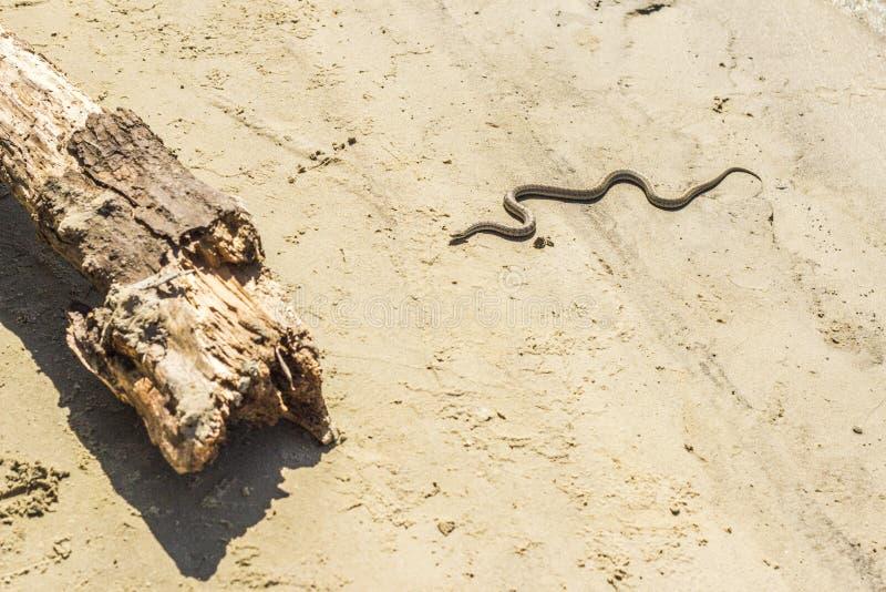 蛇爬行对日志 图库摄影