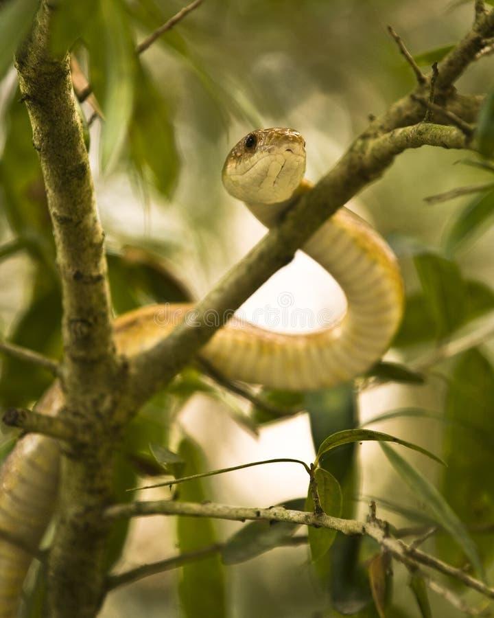 蛇结构树 图库摄影