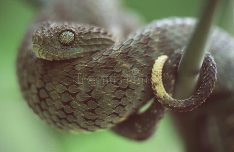 蛇蝎 库存照片