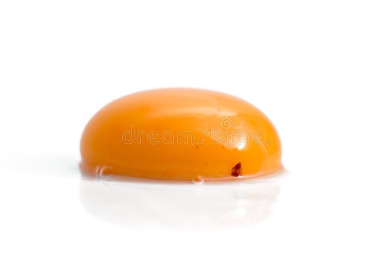 蛋原始的卵黄质 库存图片