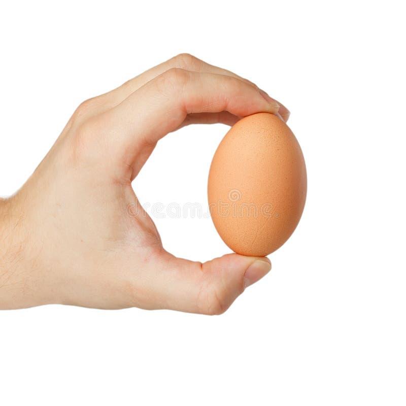 蛋现有量 免版税库存图片
