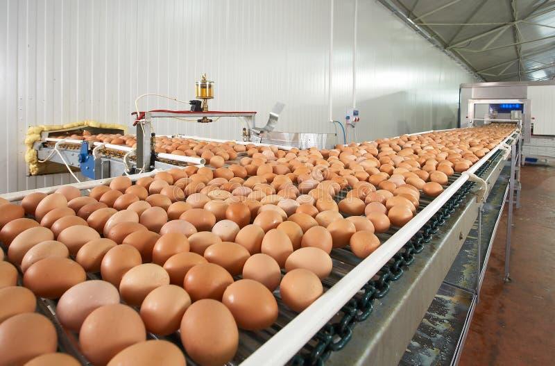 蛋生产 免版税库存照片