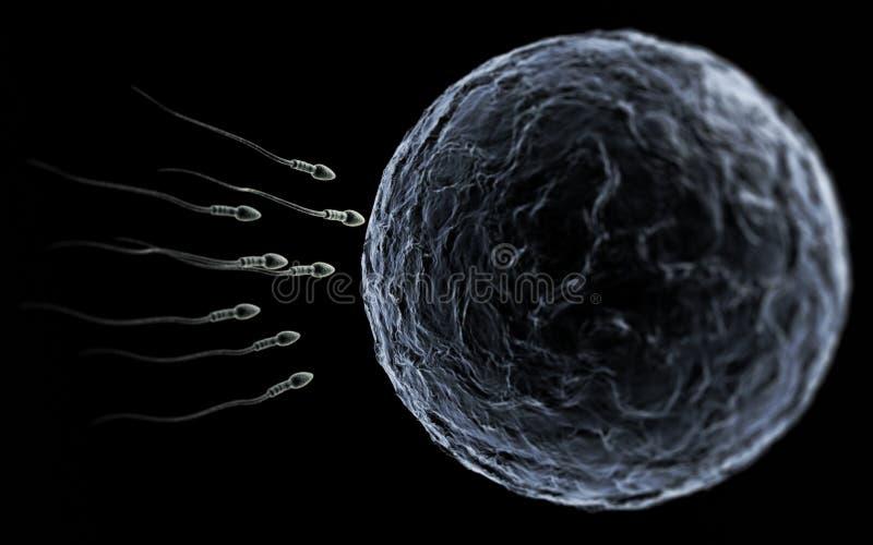 蛋精液 皇族释放例证