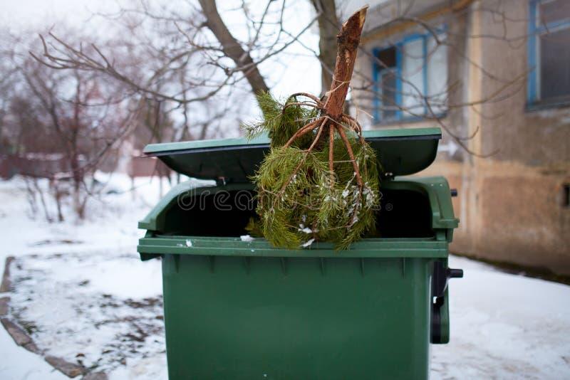 蛋糕圣诞节结尾宴餐其它 在垃圾桶的使用的和被放弃的cutted杉树用垃圾车等待汇集  免版税库存图片