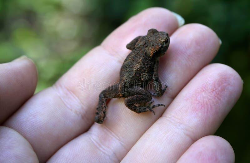 蛙一点 免版税库存图片