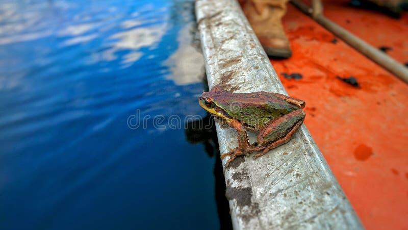 蛙 库存图片