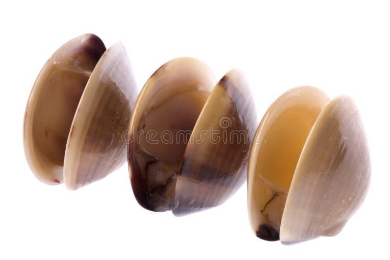 蛤蜊可食查出的活 图库摄影